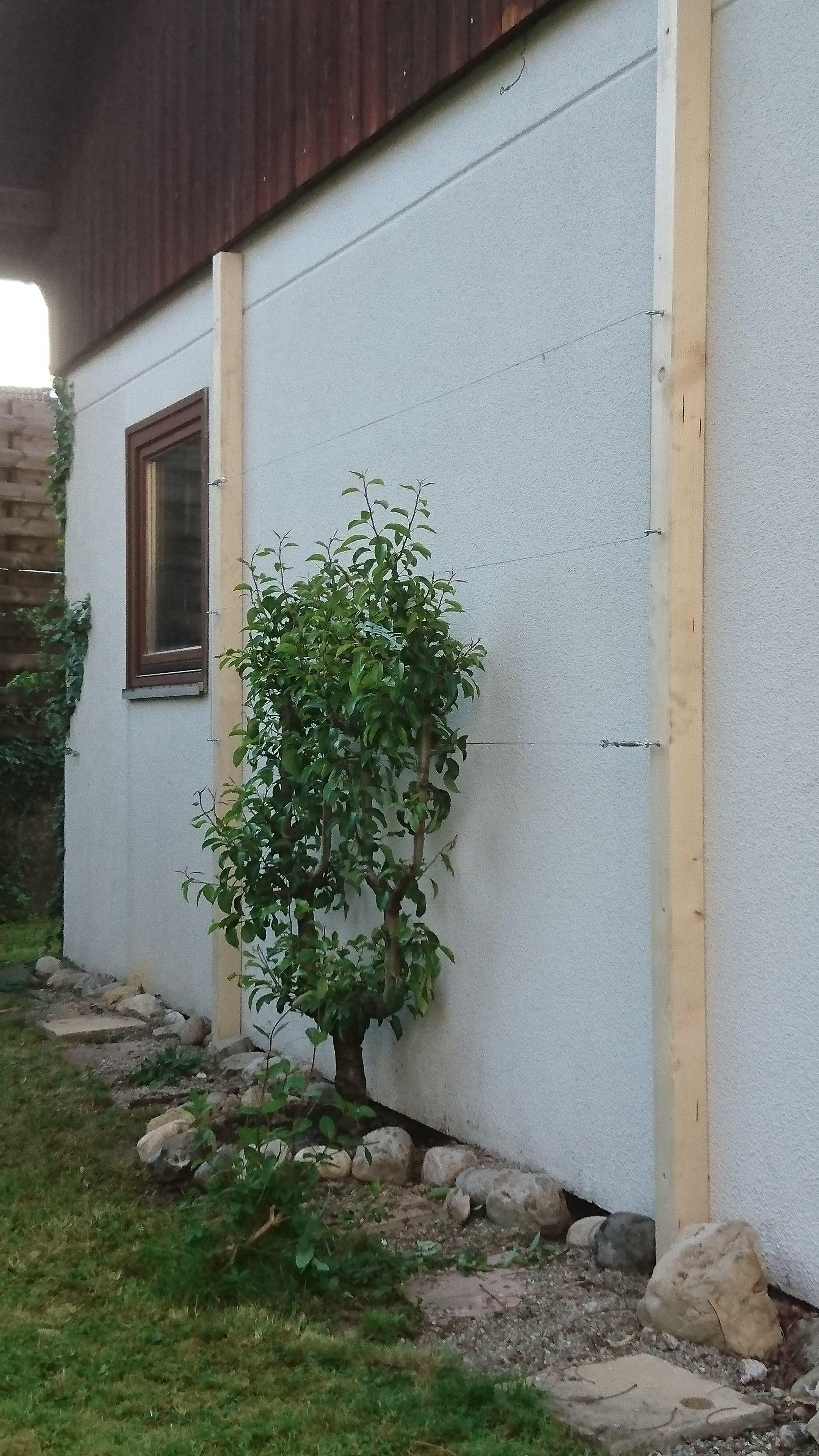 Bepflanzung an Hausmauer