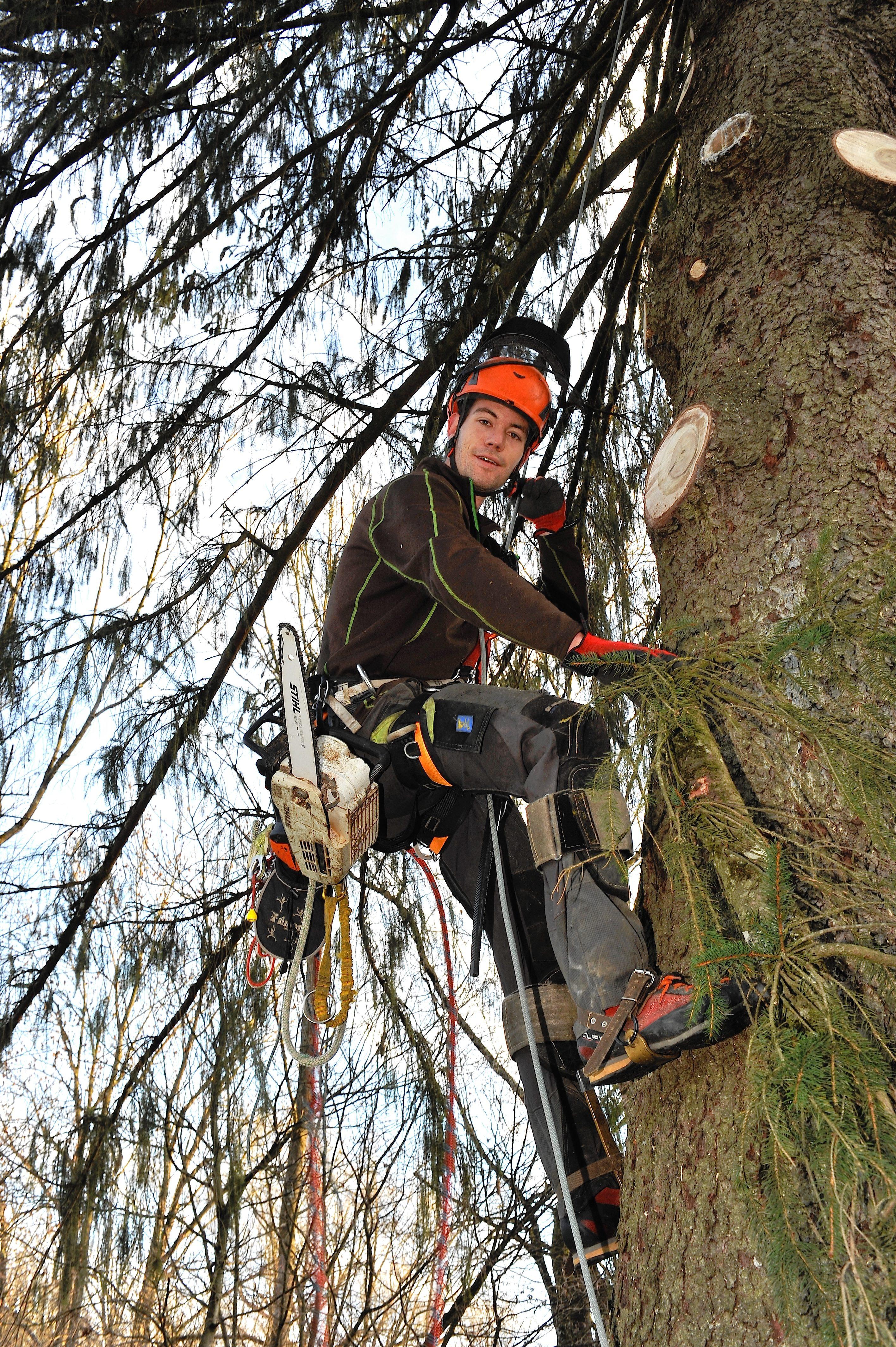 Baumpflege Daniel Weber