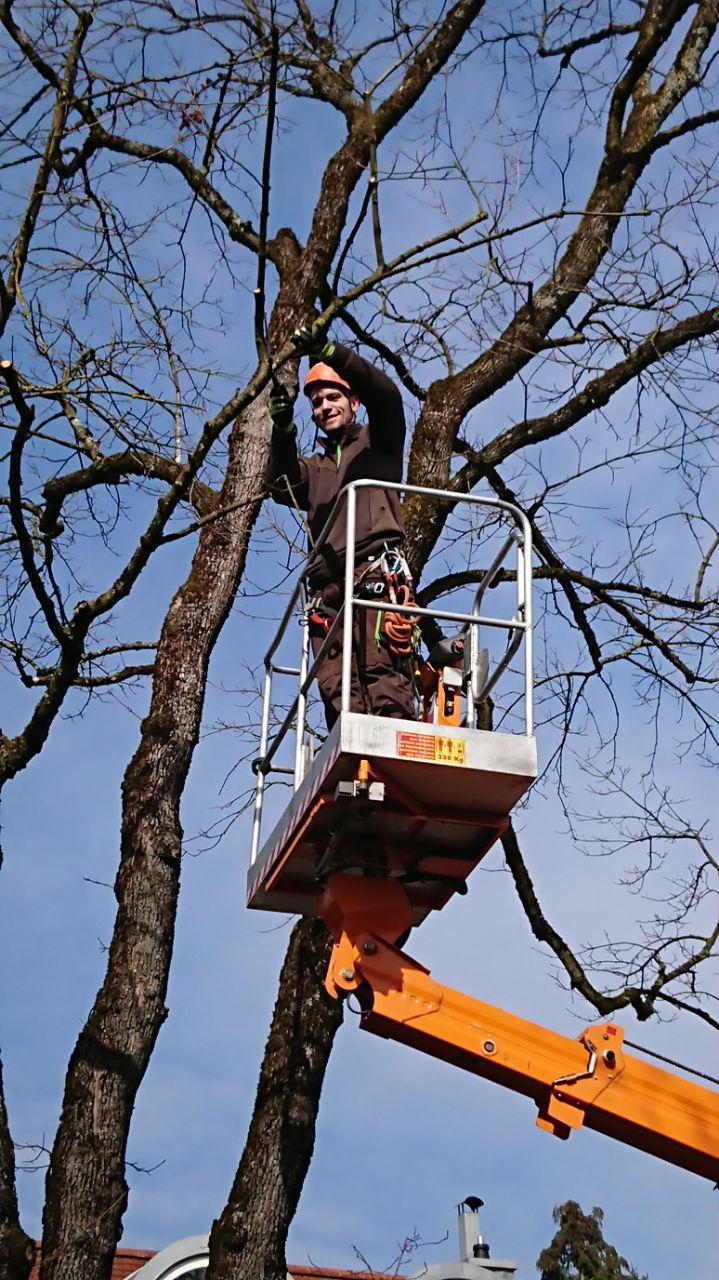 Hebebühne zur Baumfällung und Baumpflege